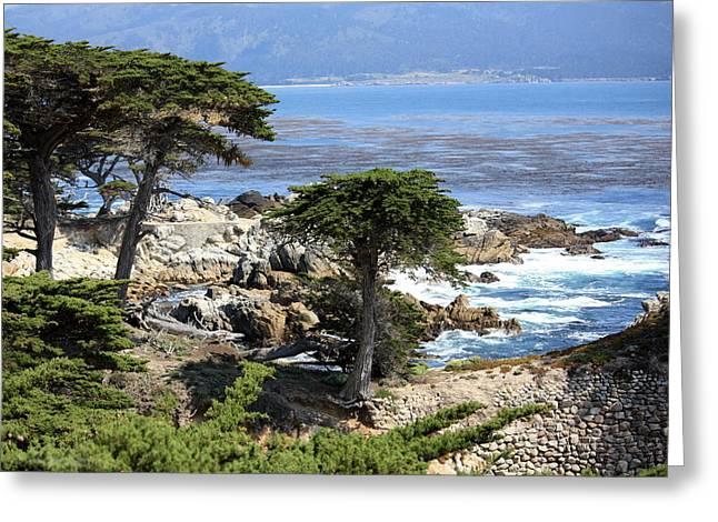 Carmel Seaside With Cypresses Greeting Card by Carol Groenen