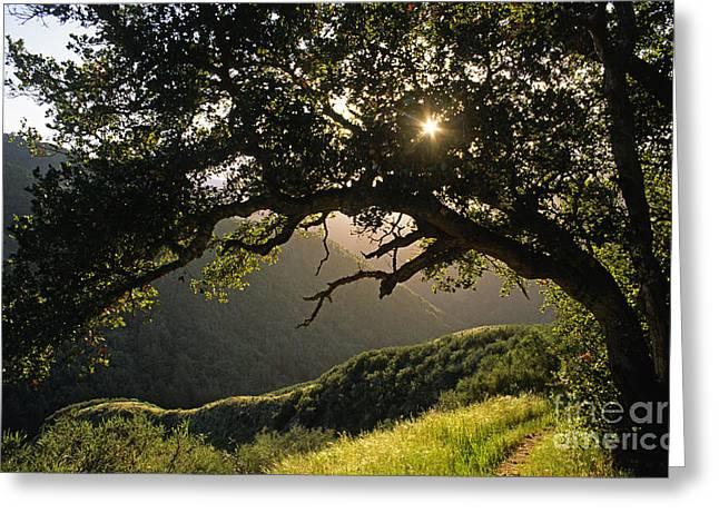 Carmel-valley-32-20 Greeting Card
