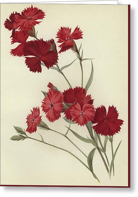 Carnations Greeting Card by English School