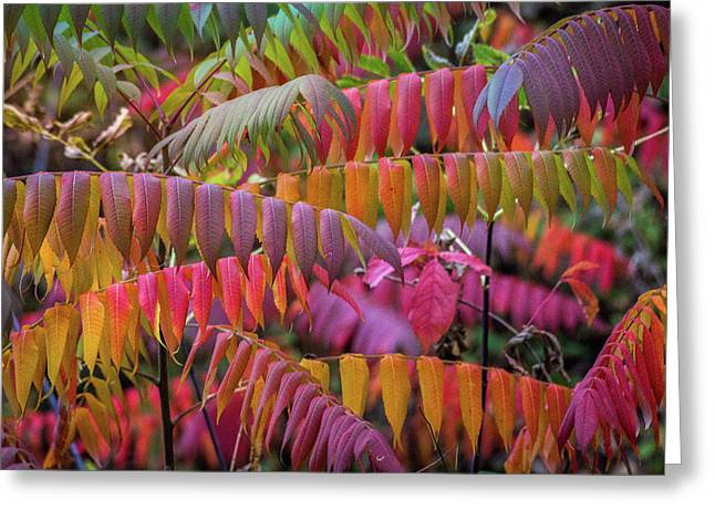 Greeting Card featuring the photograph Carnival Of Autumn Color by Bill Pevlor