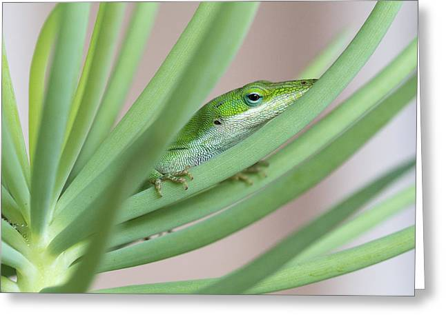 Carolina Anole Greeting Card