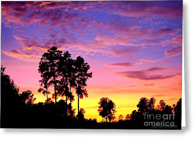 Carolina Pine Sunset Greeting Card by Patricia L Davidson