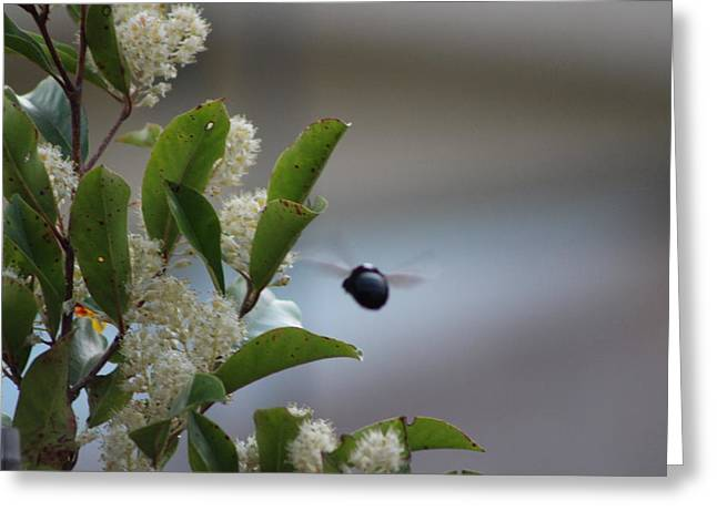 Carpenter Bee In Flight Greeting Card by Colleen Cornelius