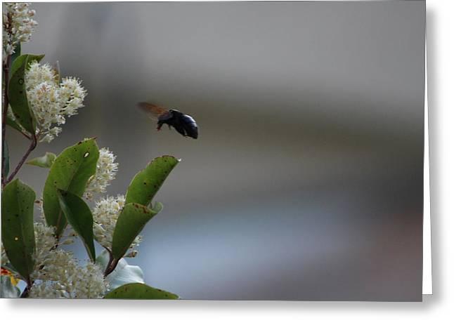 Carpenter Bee Landing Greeting Card by Colleen Cornelius