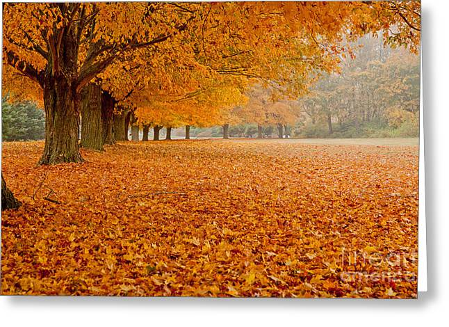 March Of The Maples Greeting Card by Butch Lombardi