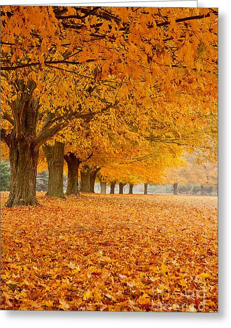 Carpet Of Gold II Greeting Card