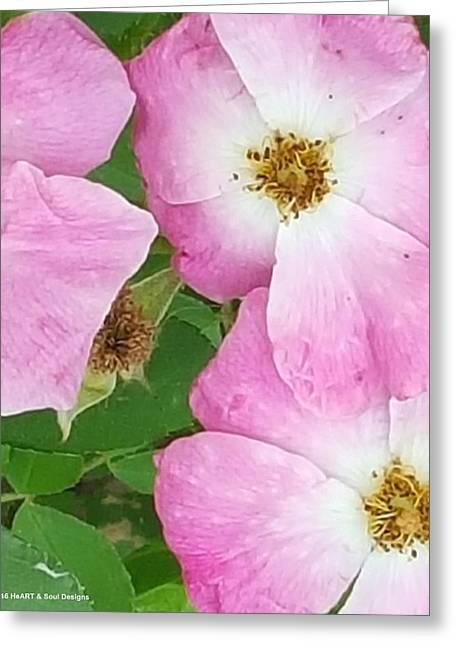 Carpet Of Pink Greeting Card
