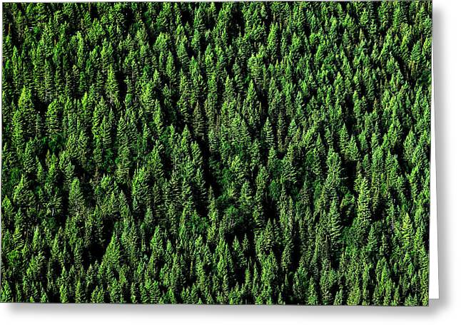 Carpet Of Trees Greeting Card by Todd Klassy