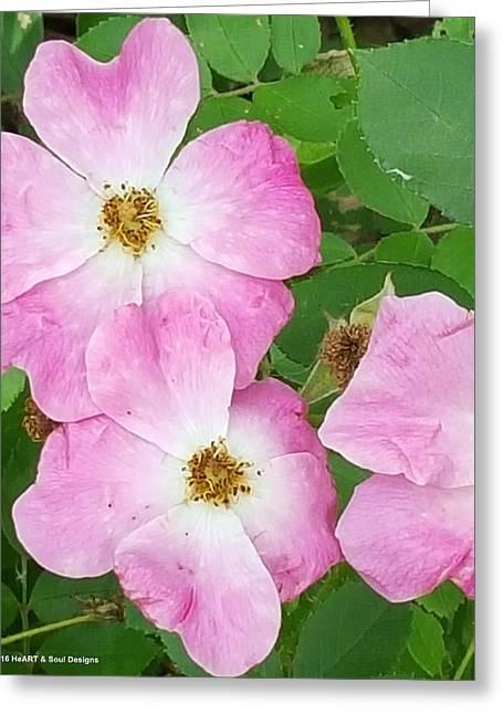 Carpet Roses Greeting Card