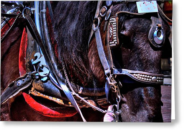 Carriage Horse Greeting Card by David Patterson