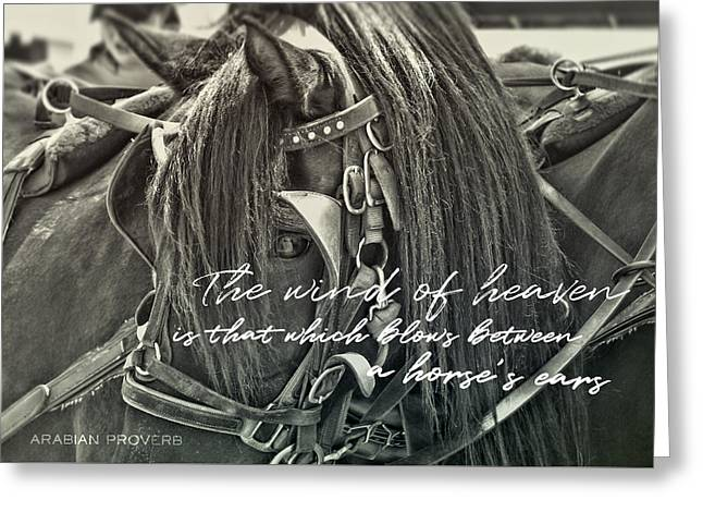 Carriage Horse Quote Greeting Card