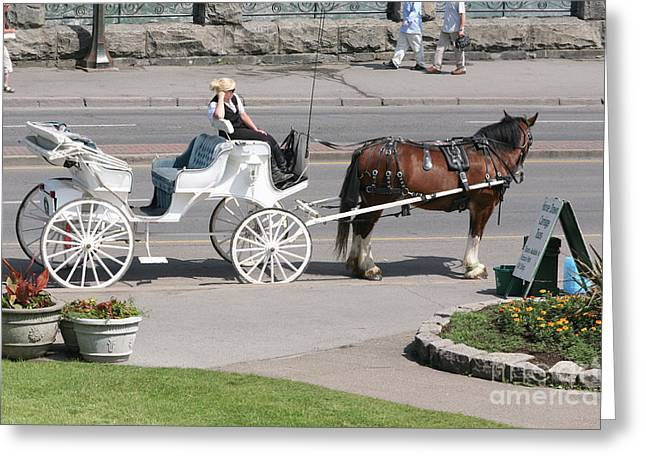 Carriage Horse Ride  Greeting Card