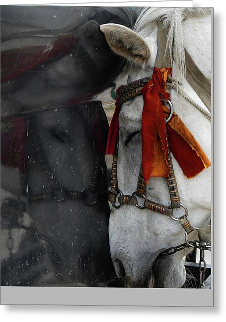 Carriage Horse In Black And White Greeting Card