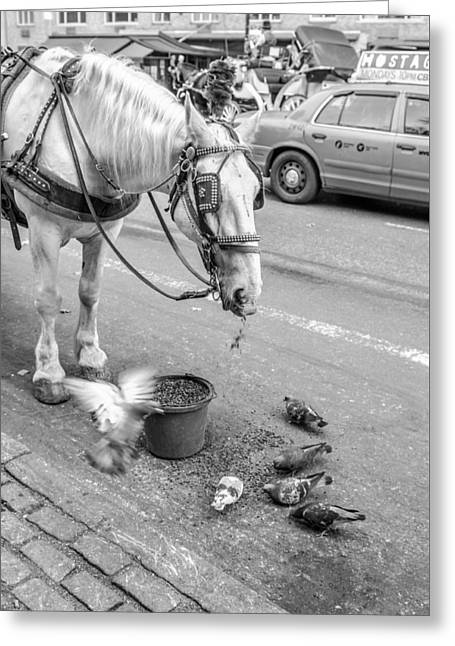 Carriage Pigeon Greeting Card by Brandi Fitzgerald