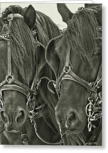 Paired Carriage Ponies Greeting Card by JAMART Photography