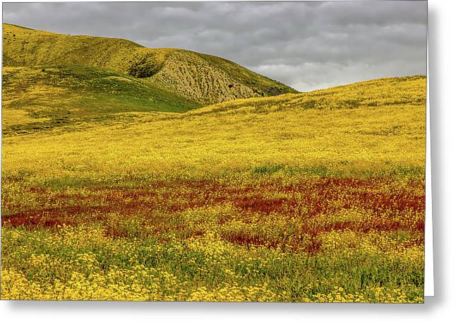 Greeting Card featuring the photograph Carrizo  Plain Super Bloom 2017 by Peter Tellone