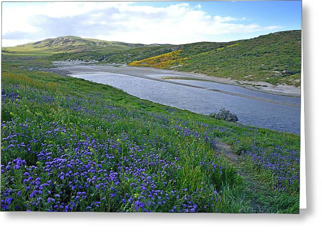 Carrizo Pond And Wildflowers Greeting Card by Kathy Yates