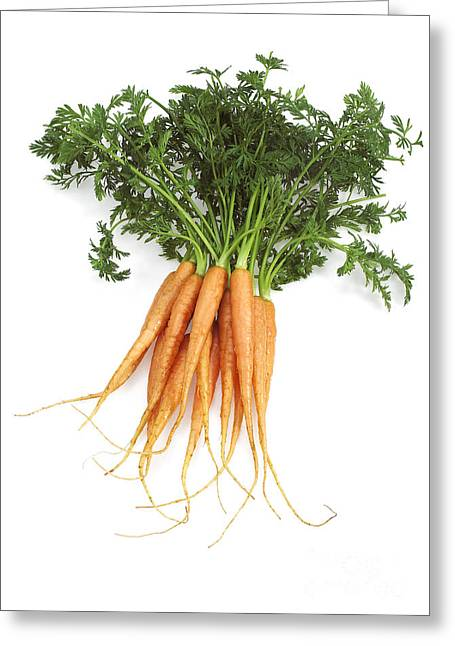 Carrots Daucus Carota Greeting Card by Gerard Lacz