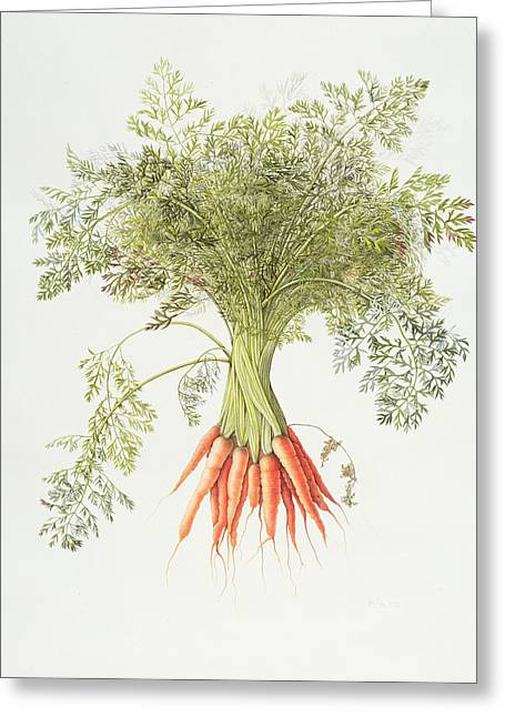 Carrots Greeting Card by Margaret Ann Eden