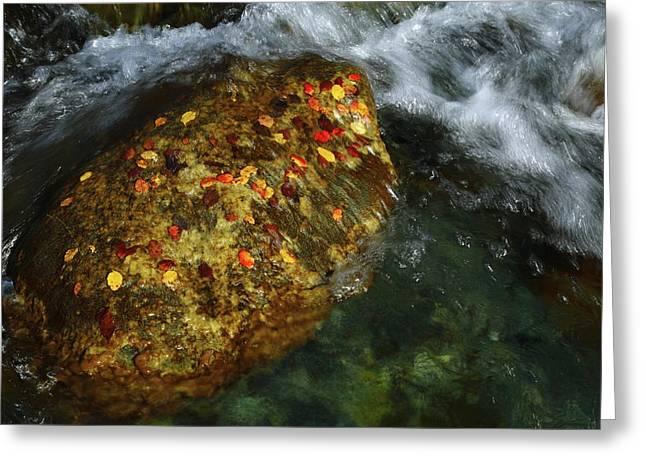 Cascade Creek 2am-000846 Greeting Card by Andrew McInnes