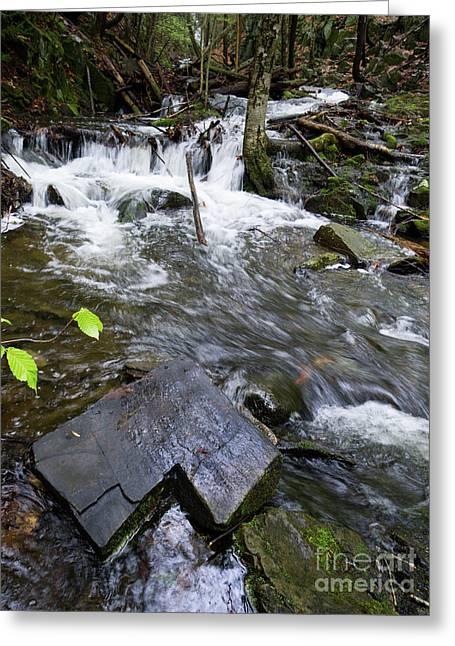 Cascade Falls Stream, Farmington, Maine  -30329 Greeting Card