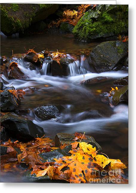 Cascades Of Gold Greeting Card