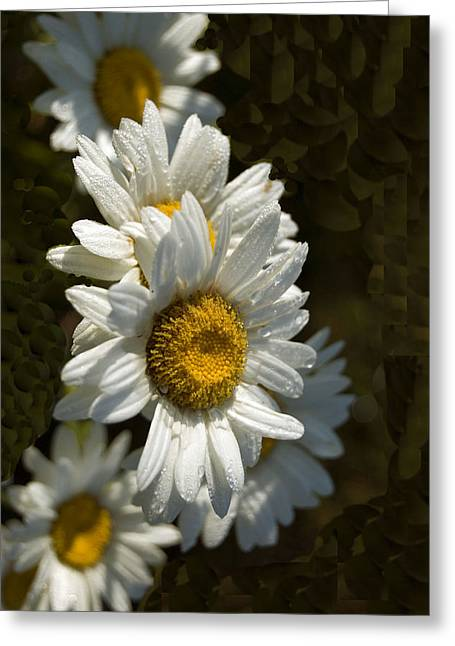 Greeting Card featuring the photograph Cascading Daisy by Elsa Marie Santoro