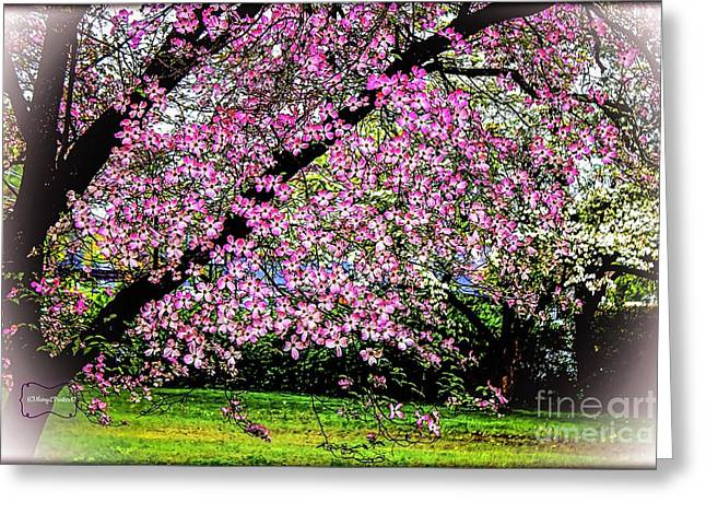 Cascading Dogwood Copyright Mary Lee Parker 17, Greeting Card