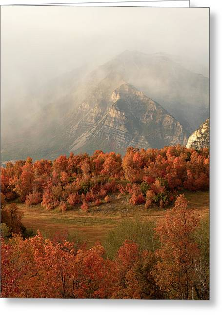 Cascading Fall Greeting Card