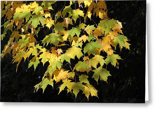 Greeting Card featuring the photograph Cascading Leaves by Doris Potter