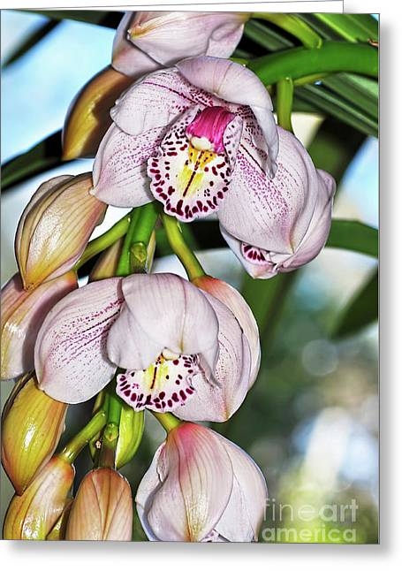 Cascading White Orchids By Kaye Menner Greeting Card by Kaye Menner