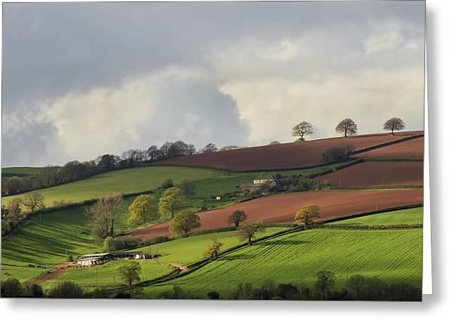 Caseberry Downs In Devon Greeting Card by Pete Hemington