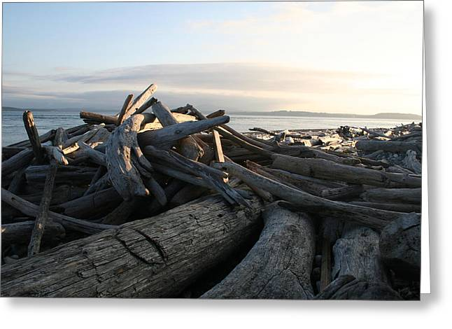 Casey Driftwood Greeting Card