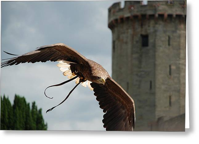 Castle And Eagle Greeting Card by Irum Iftikhar