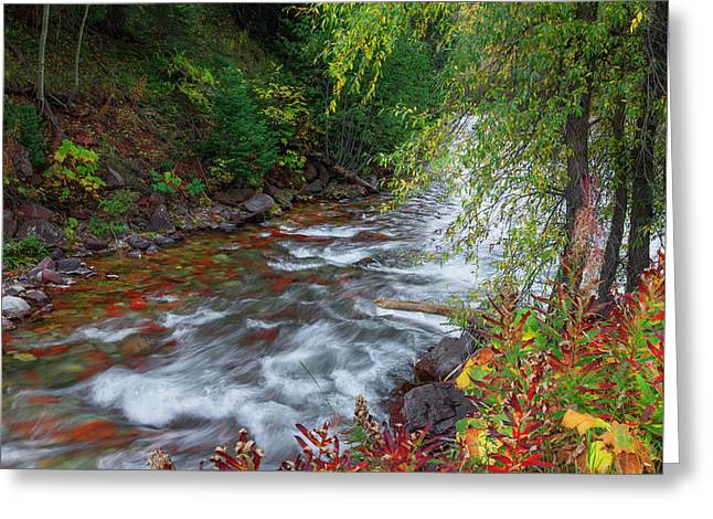 Greeting Card featuring the photograph Castle Creek Beauty by Tim Reaves