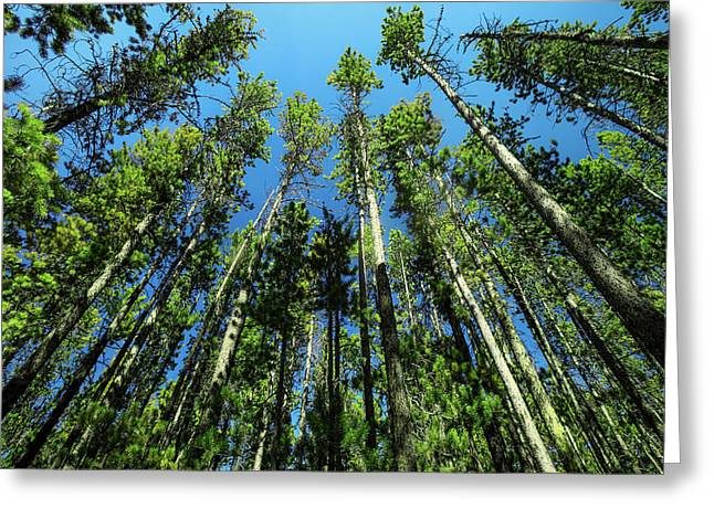Castle Mountain Trees Greeting Card by Todd Klassy