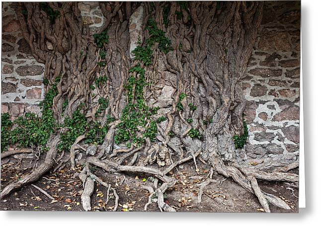Castle Wall With Creeping Tree Roots Greeting Card by Artur Bogacki