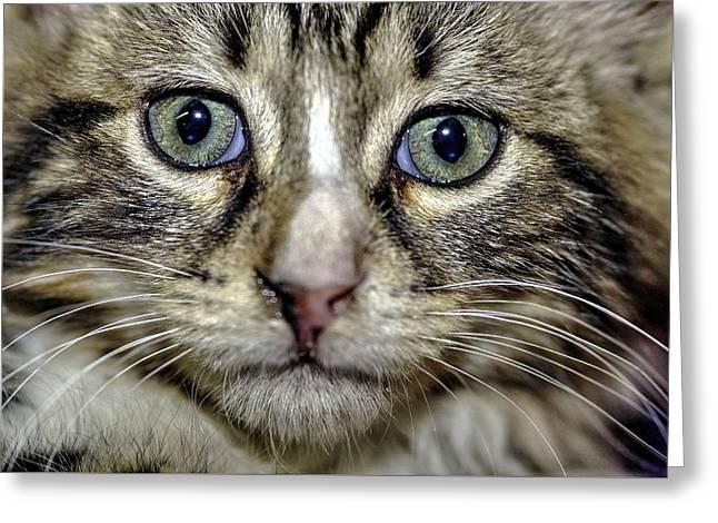 Cat 1 Greeting Card