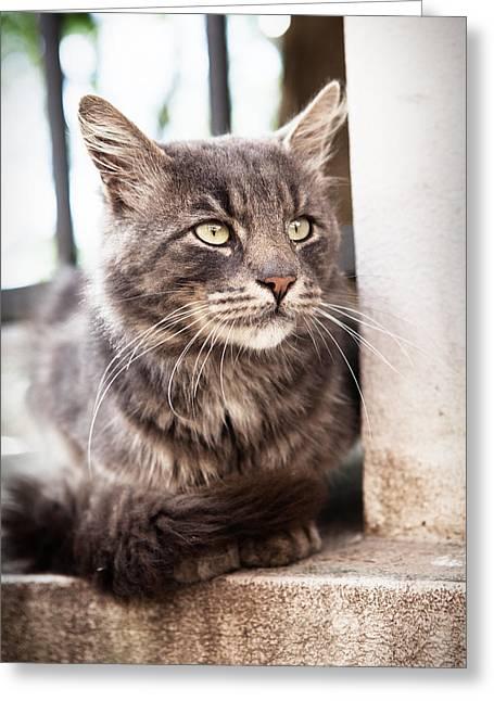 Cat #2480 Greeting Card
