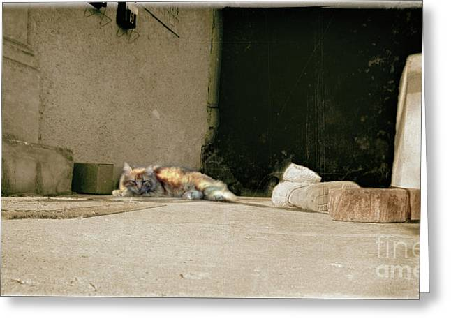 Cat And Boots  Greeting Card by Steven Digman