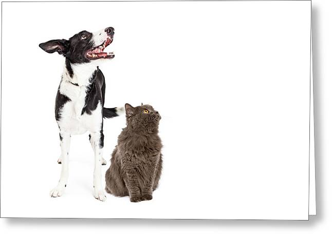 Cat And Dog Looking Up Into Blank Copy Space Greeting Card by Susan Schmitz