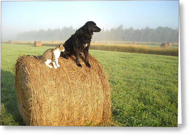 Cat And Dog On Hay Bale Greeting Card