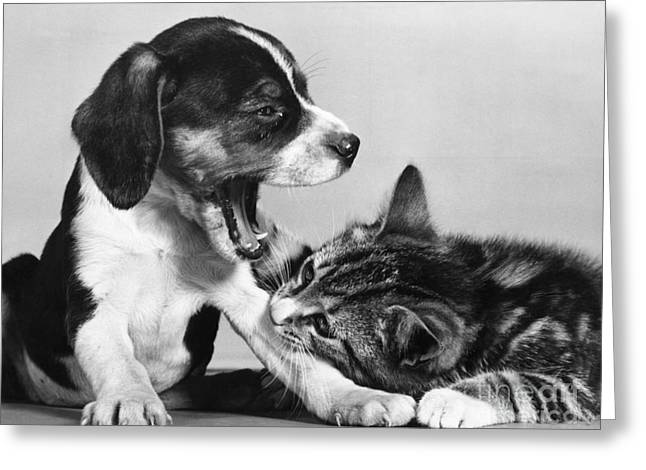 Cat And Dog Too Sleepy To Fight Greeting Card
