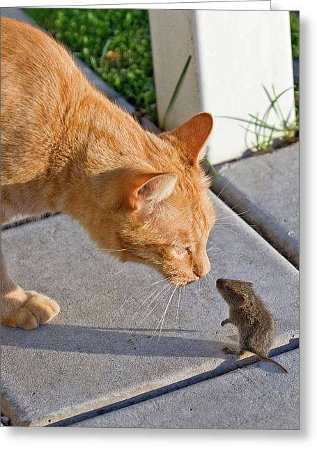 Cat And Mouse Greeting Card