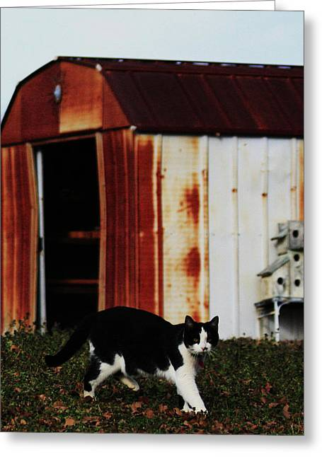 Cat And The Tool Shed Greeting Card by Kim Henderson