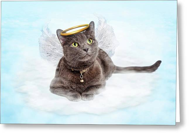Cat Angel On Cloud In Heaven Greeting Card by Susan Schmitz