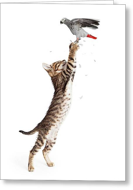 Cat Catching Bird In Flight Greeting Card