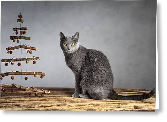 Cat Christmas Greeting Card by Nailia Schwarz