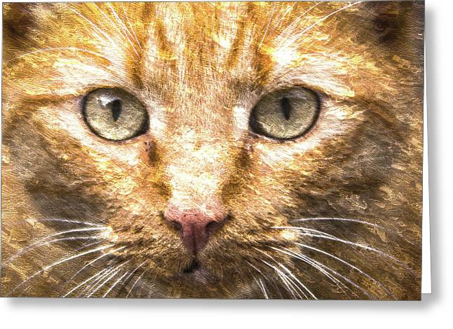 Cat Closeup Oil Painting Greeting Card by Design Turnpike