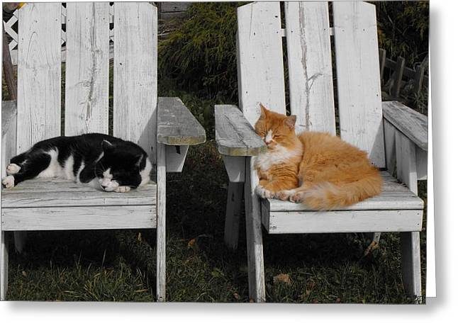 Cat Days Of Summer Greeting Card by David and Lynn Keller